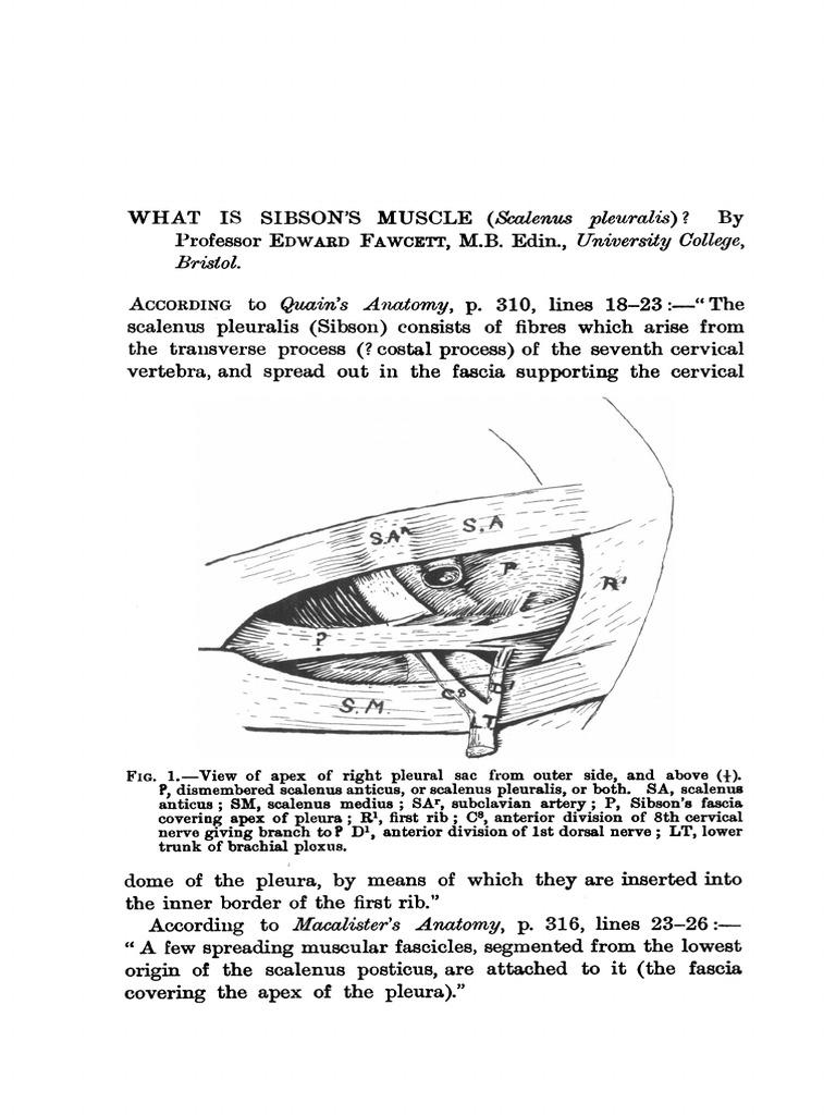 janatphys00097-0116.pdf   Anatomy   Animal Anatomy