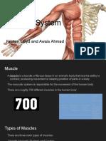 muscular system b4