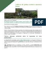 El Aumento de Cultivos de Palma Aceitera Amenaza La Amazonia Peruana