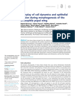 Etournay Et Al. - 2015 - Interplay of Cell Dynamics and Epithelial Tension