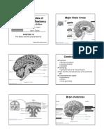 Chapter 19 Brain