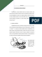 Anatomia Vestibular