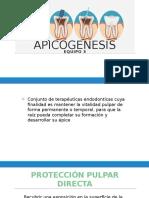 APICOGENESIS (1)