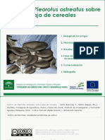 Cultivo de Pleorotus Sobre Paja de Cerales V3