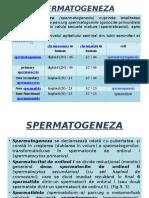 96966028-GAMETOGENEZA-spermatogeneza-ovogeneza.pptx