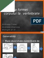 Evoluția Formei Corpului La vertebrate