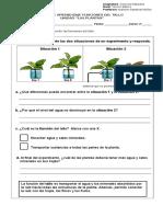 Las Plantas Función Del Tallo