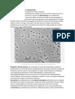 Las Bacterias Del Vinagre