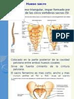 huesosacro-121006132807-phpapp02