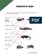 03 Guía de Respuestas - Estudio de Los Reptiles