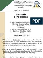 Susana Salazar Melendez  Neisseria gonorrhoeae grupo 2234.pptx