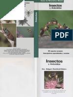 Animales - Insectos y Aracnidos