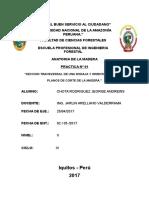 Jeorge-practica Nº01- Anatomia de La Madera