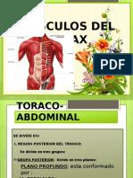 Musculos Del Torax- Marina