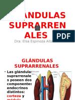 Glandulas suprarenales