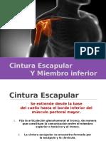 Cintura Escapular y Miembro Superior. Dr Alvaro Flores Romero