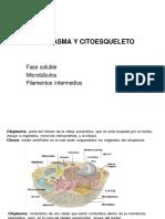 17. Citopl-citoesqueleto