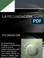 Clase 2 - Fecundacion, Segmentacion Implantación