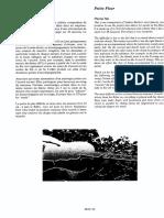 Petite Fleur.pdf