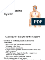 Lecture 25 - the Endocrine System