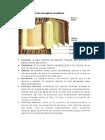 Estructura Macroscópica Madera