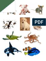 Animales Acuaticos Aereos Terres