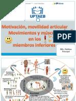 Mandala Movilidad ,Músculos de Los Miembros Inferiores.