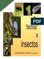 De Bichos a Insectos