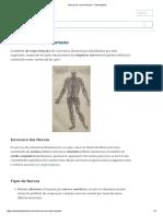 Nervos Do Corpo Humano - Toda Matéria