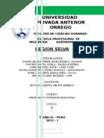 Region Selva Exposicion