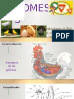 03. Aves Domesticas (1)