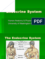 Endocrine System.ppt