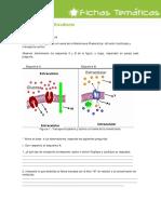 ACTIVIDAD Difusion Facilitada y Transporte Activo
