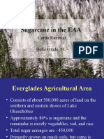 Sugar Cane EAA Overview