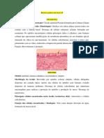 laminas de histologia