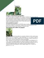 Cultivo de Papaya