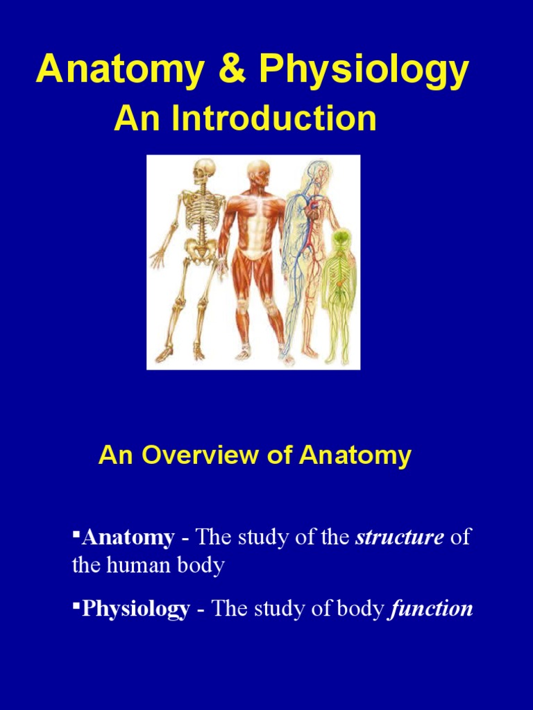 Anatomy Physiology Intro Powerpoint Chapter 1 Human Body