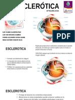 6. Esclerotica.pptx