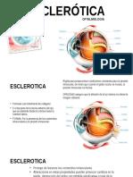 6. Esclerotica