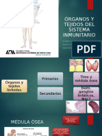 Órganos y Tejidos Del Sistema Linfático