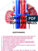 5A1 Glandulas Suprarrenales