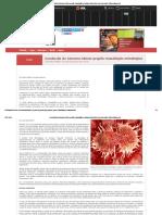Conclusão Do Genoma Câncer Propõe Reavaliação Estratégica _ Scientific American Brasil _