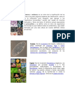 REINOS BIOLOGICOS