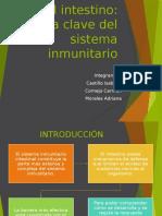 Intestino Papel en s Inmune