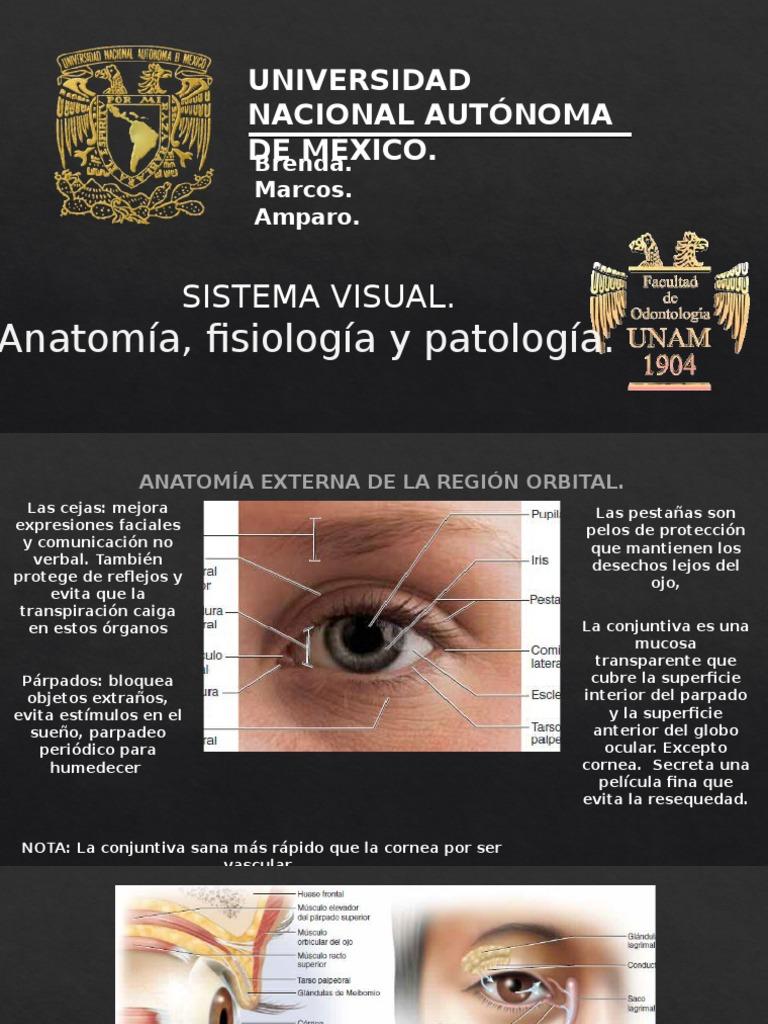 SISTEMA VISUAL. TODOS LOS DERECHOS RESERVADOS MARKS INC. CORPORATION ...