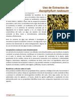 60. Uso Extractos de Ascophyllum Nodosum (1)