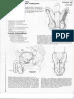 Fernandez - Anatomía Cromodinámica.pdf