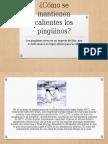 Cómo Se Mantienen Calientes Los Pingüinos