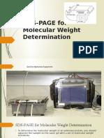 SDS-PAGE for Molecular Weight Determination