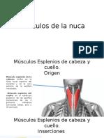 Músculos de La Nuca